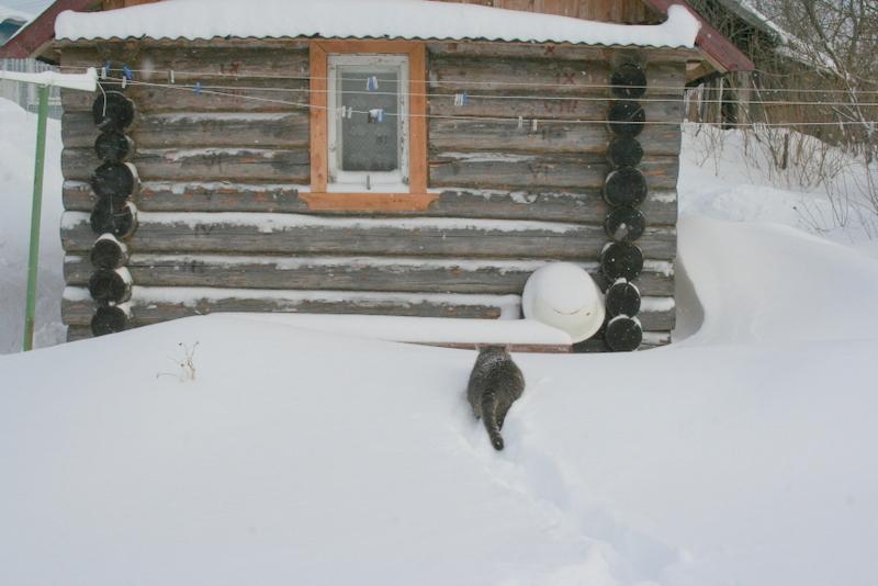 Снегопад в деревне (6)