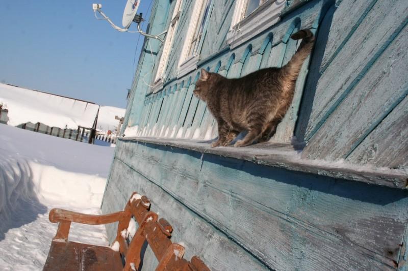 сугробы в России (19)
