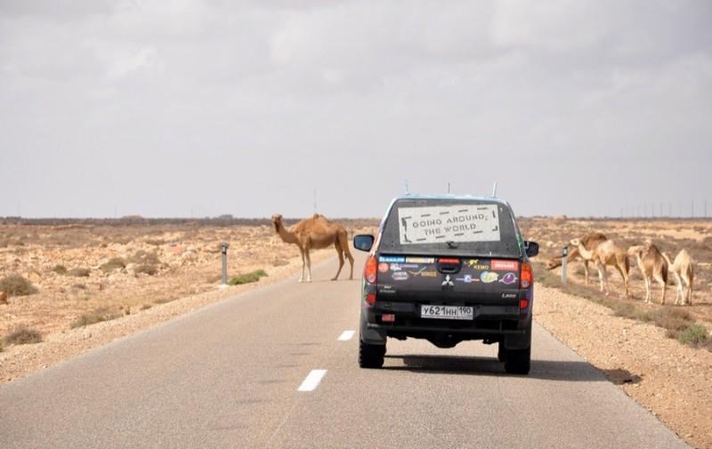 Джип и верблюды