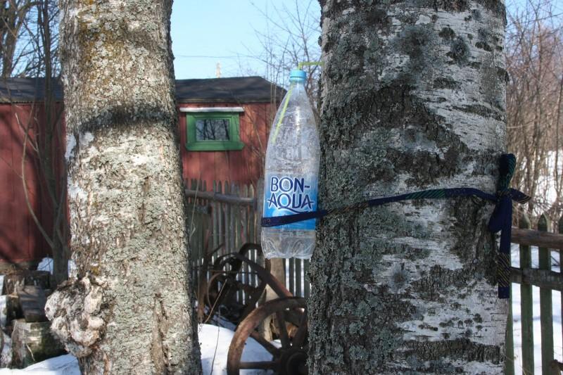 Бутылка для березового сока