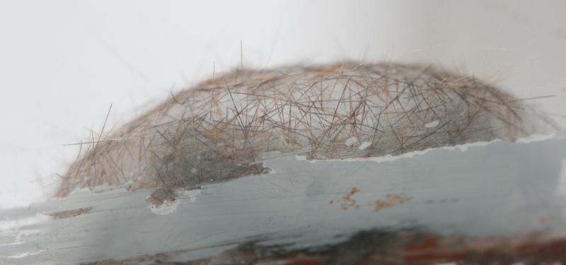 Гусеница в коконе