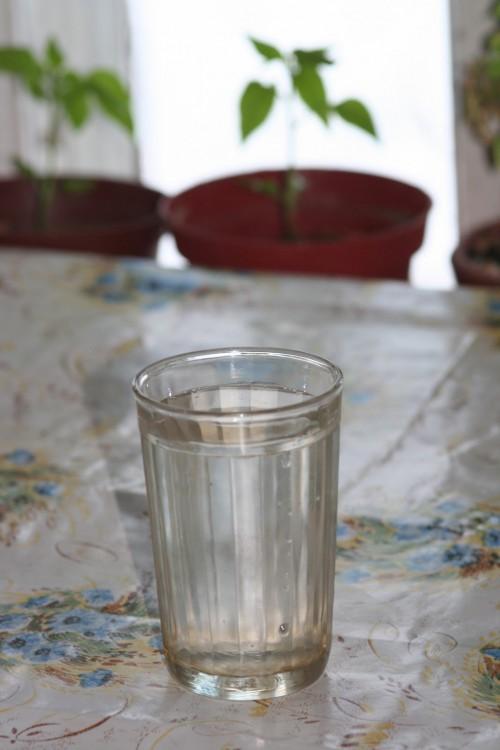 Березовый сок в деревне