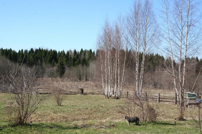 Русская деревня весна (3)