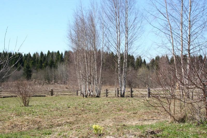 Русская деревня весна (1)