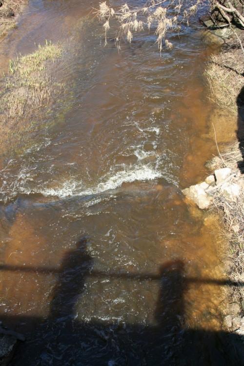 Бобровая плотина (1)