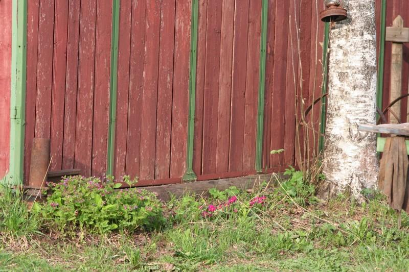 садовые цветы (1)