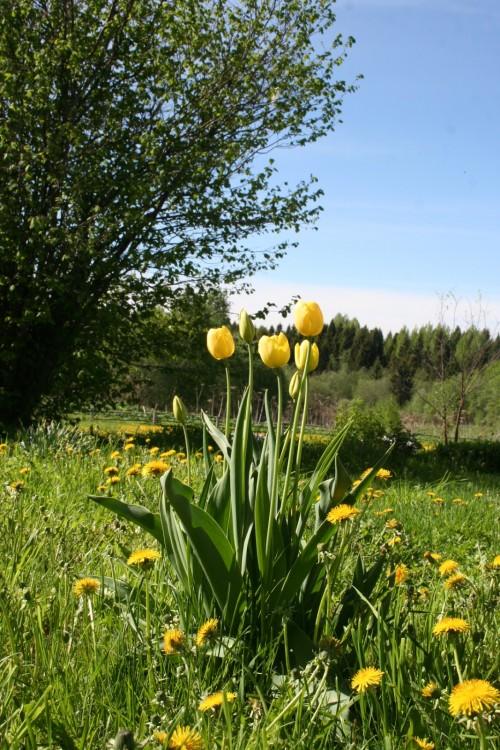 Желтые цветы (11)