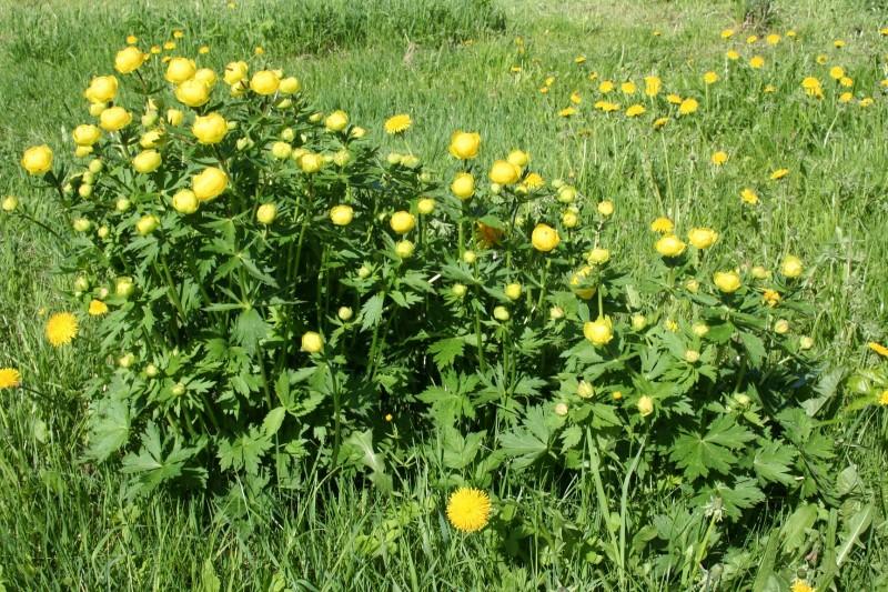 Желтые цветы (10)