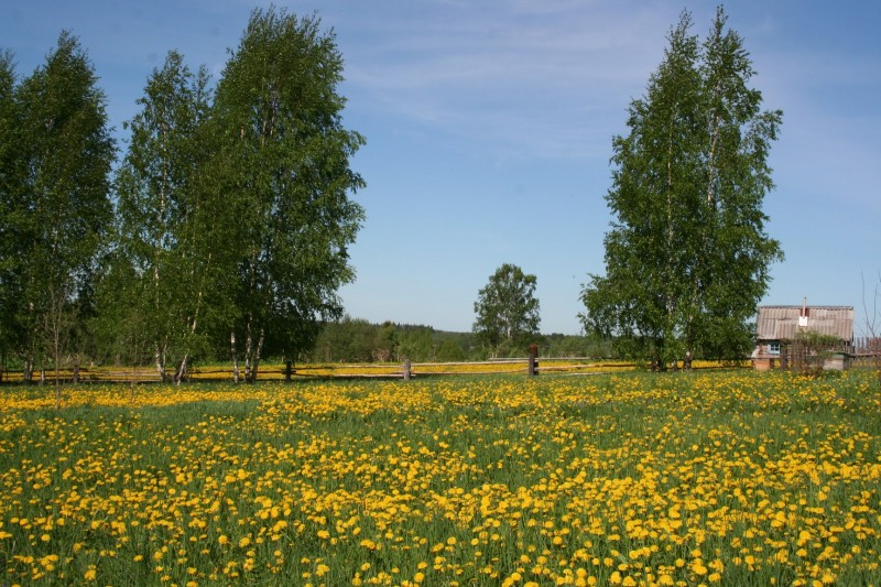 Желтые цветы (8)