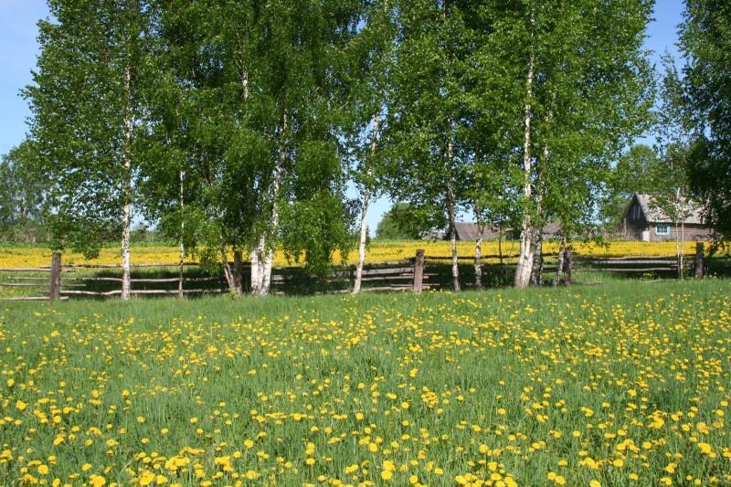 Желтые цветы (7)