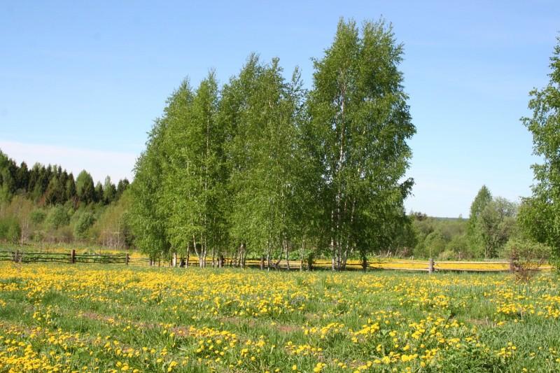Желтые цветы (4)