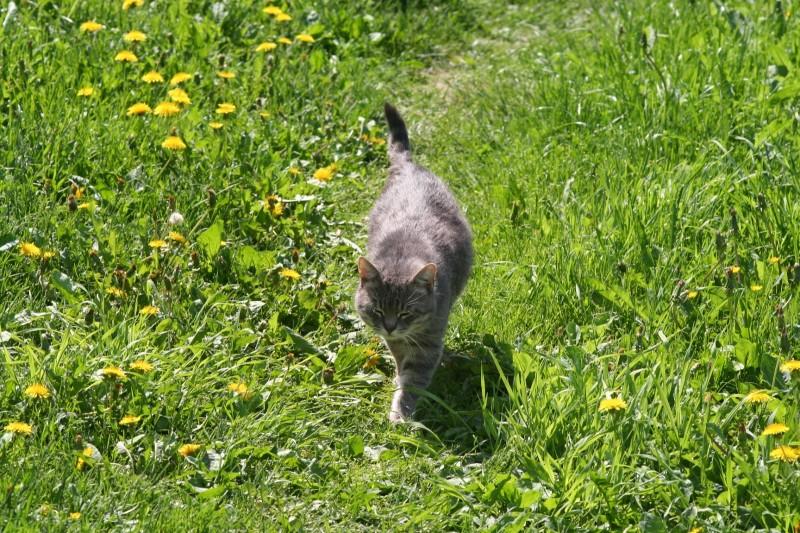 Котик на травке