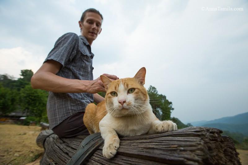 Тайский придорожный кот :)
