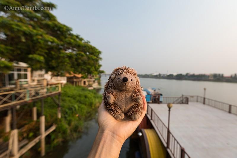 Ёжик путешественник на Севере Таиланда