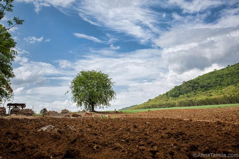 Тайские поля