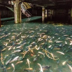 Затопленный торговый центр в Бангкоке, живой аквариум с тысячами рыб