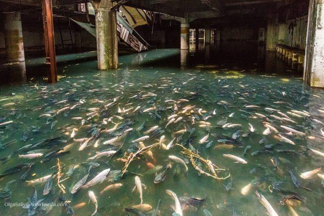 Заброшка в Таиланде, Бангкок, торговый центр с рыбами