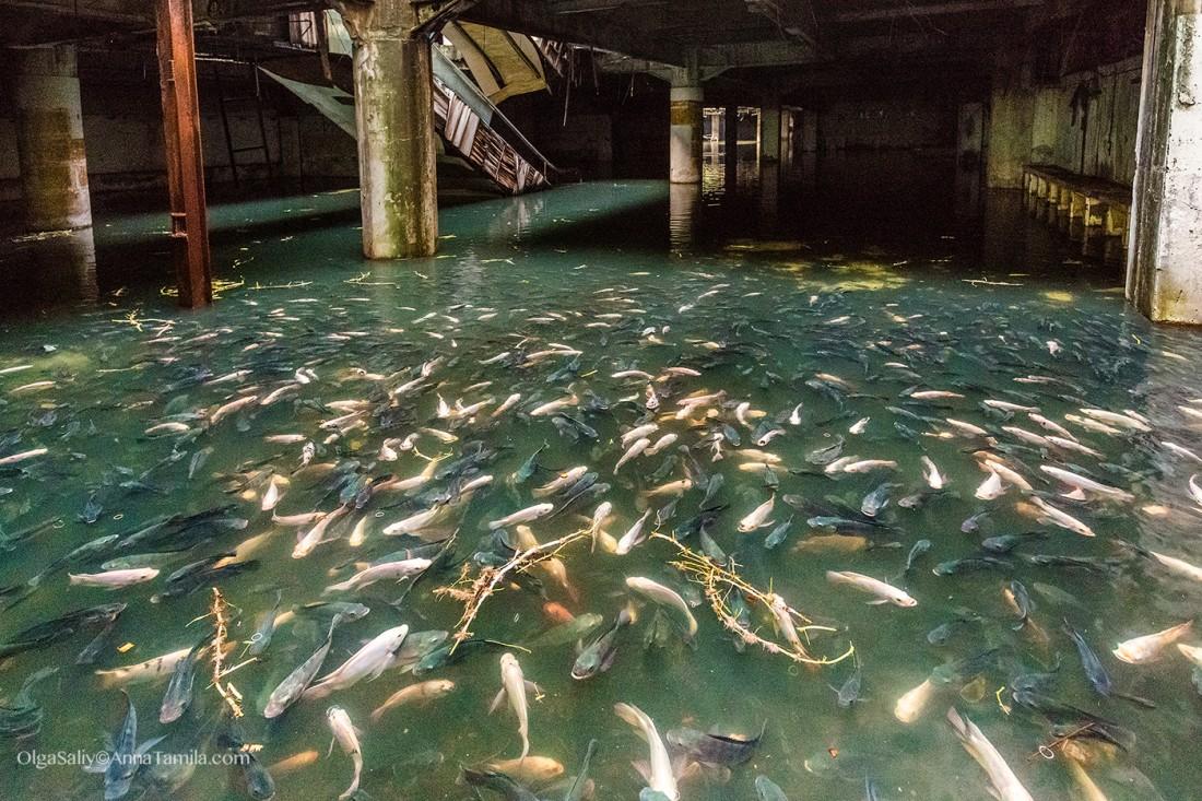 Рыбалка в заброшенных местах видео