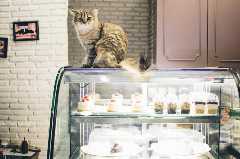 Кото кафе в Бангкоке (5)