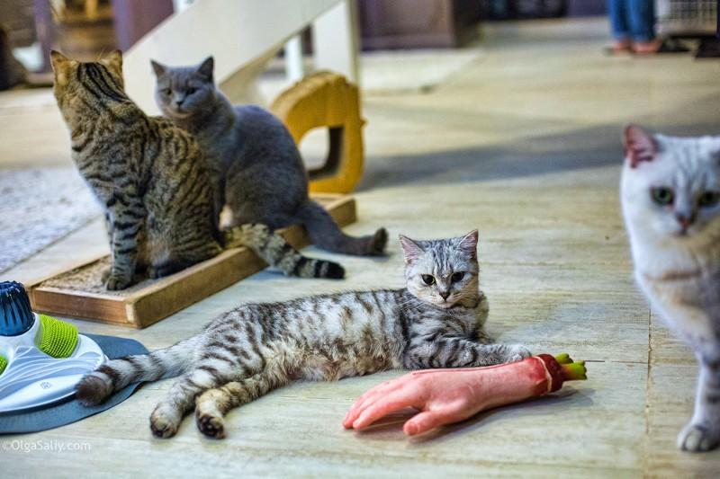 Кафе с котиками. Интересные места Бангкок