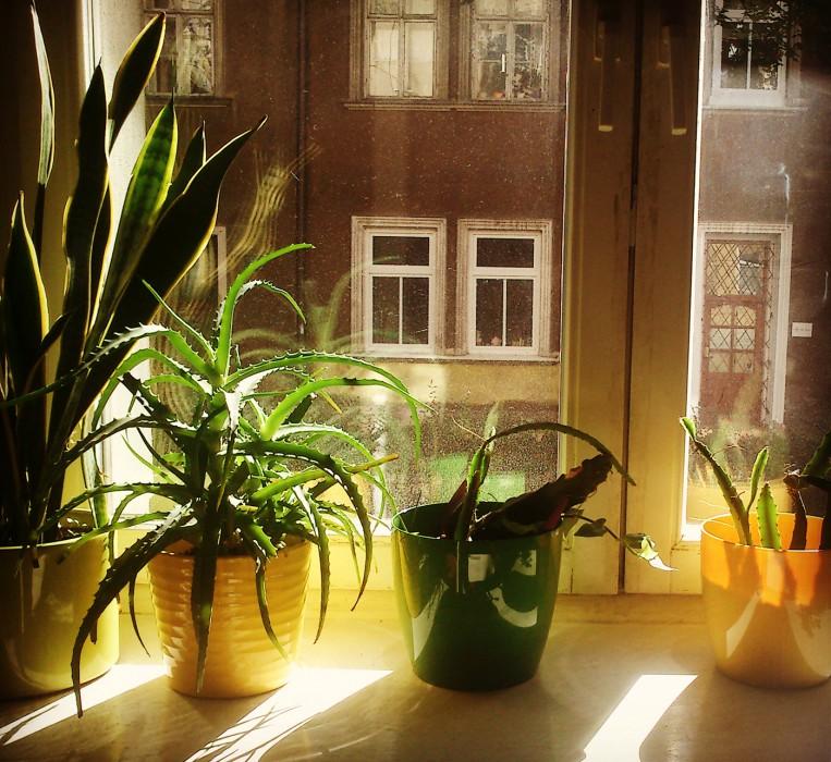 Окно в Кракове