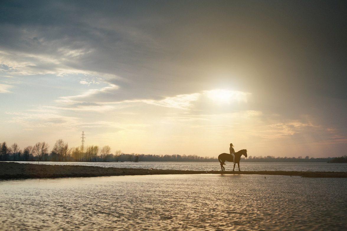 Прокат лошадей в Новосибирске (1)