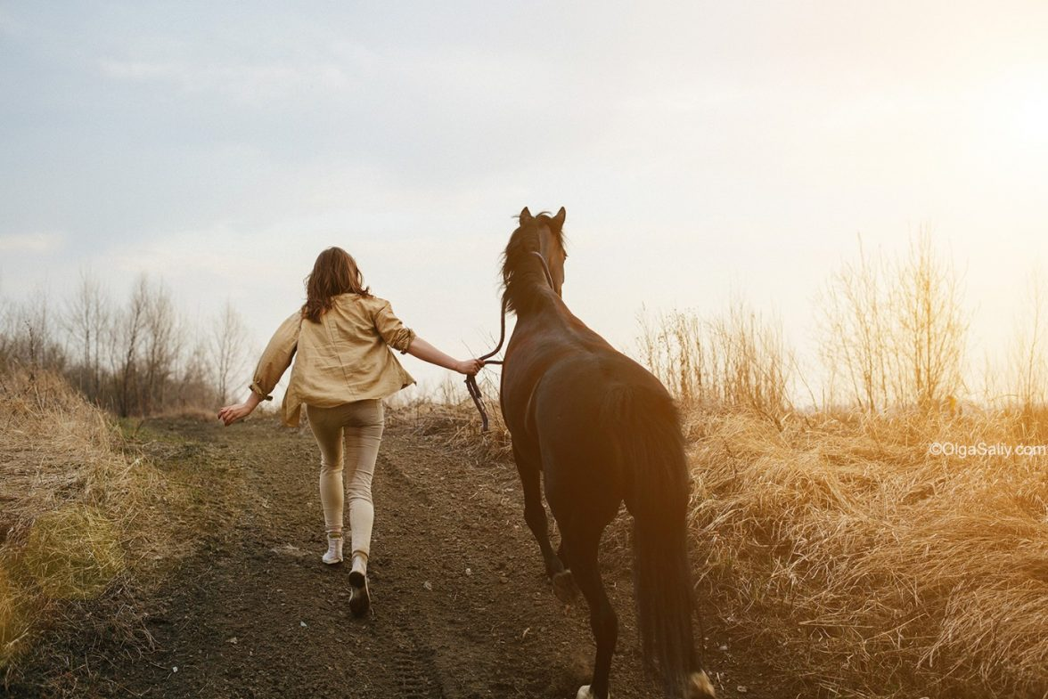 Прокат лошадей в Новосибирске (6)