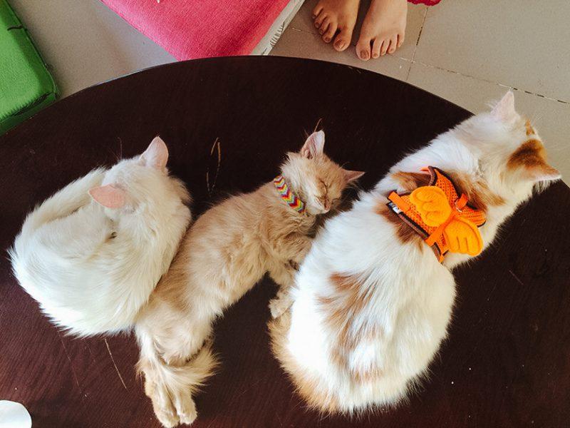 Лучшее кото-кафе Вунгтау