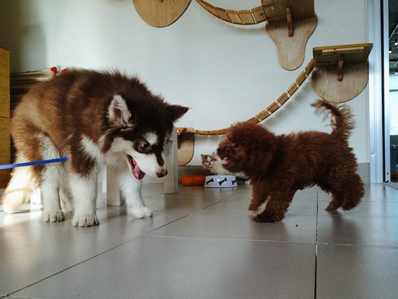 Собаки в кото-кафе, Вьетнам