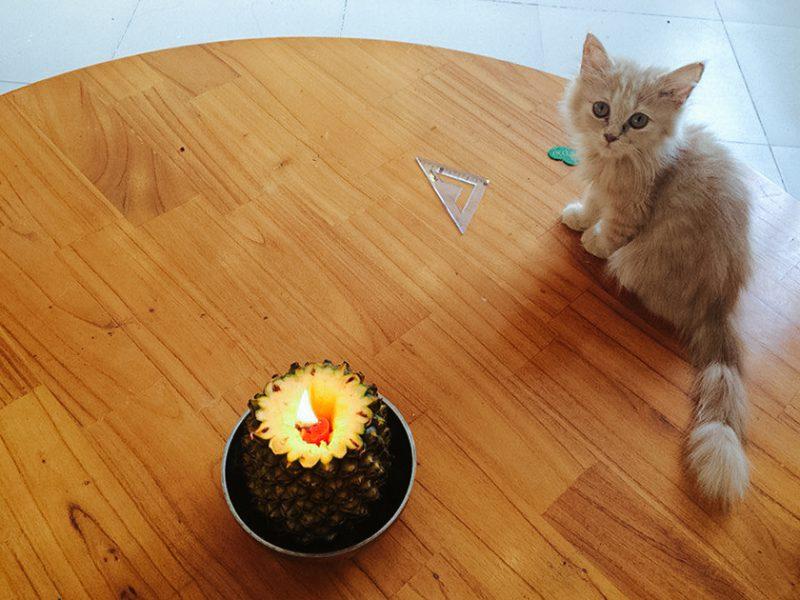 Котёнок со свечкой