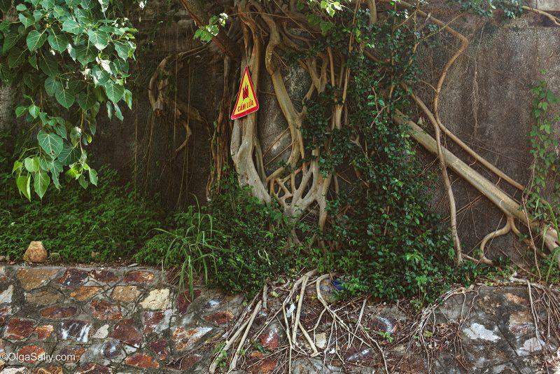 Вход в заброшенное здание заросший корнями дерева