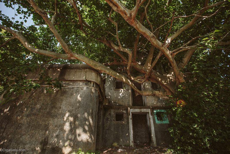Заброшенное здание заросшее красивым деревом