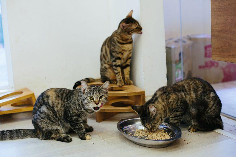 Коты в кафе