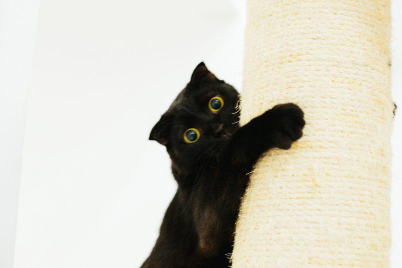 Чертый кот в кото-кафе Вьетнам