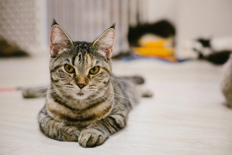 куда сходить в Хошимине: кото-кафе возле консульства (17)