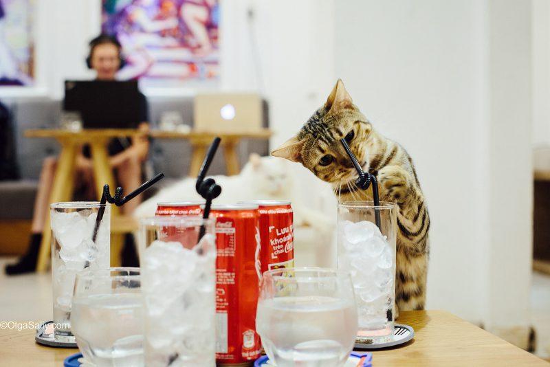 Котик на столе
