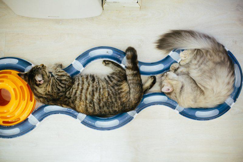 Коты дрыхнут