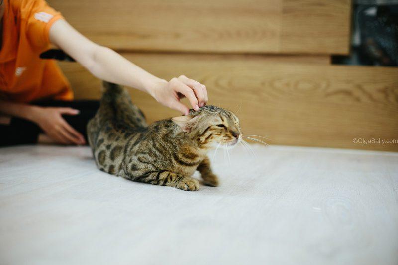 Погладить котика