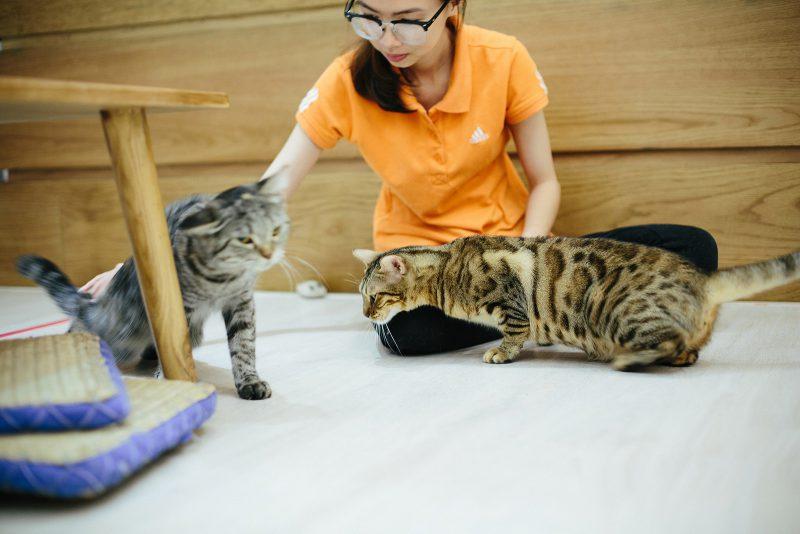 Интересные места, куда сходить в Хошимине: кото-кафе возле консульства (8)