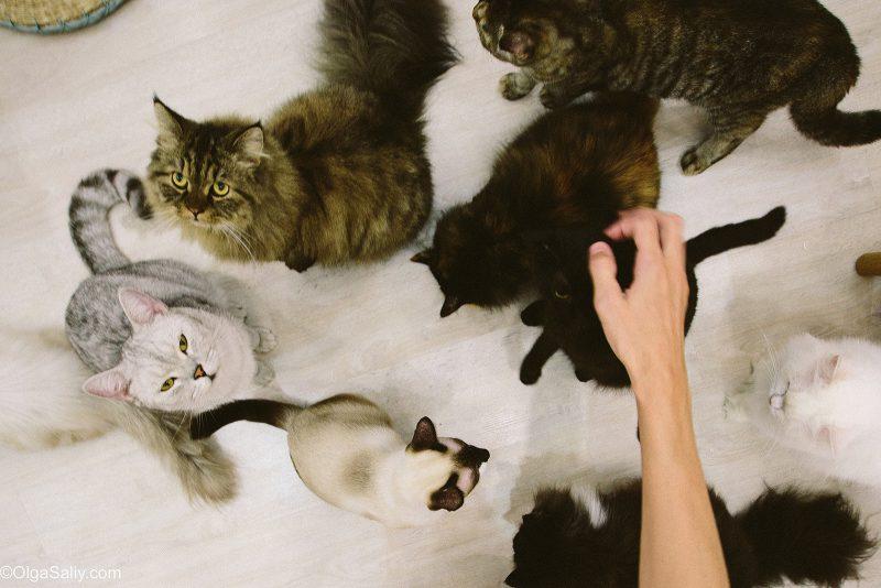 Коты просят покушать