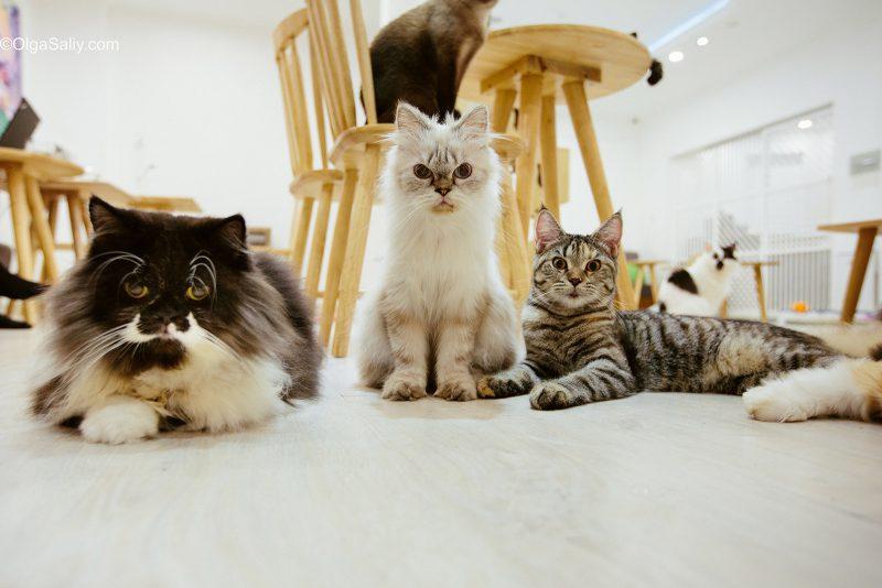Коты смотрят как человек делает уборку