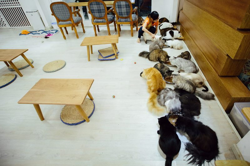 Кормление котов ICHI Cat Café Ho Chi Minh City