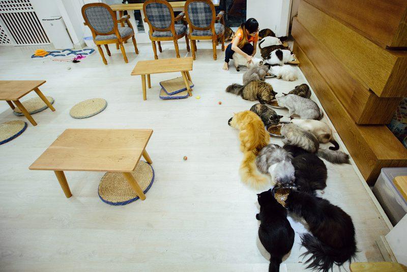 Кормление котов ICHI Cat Café Ho Chi Minh City