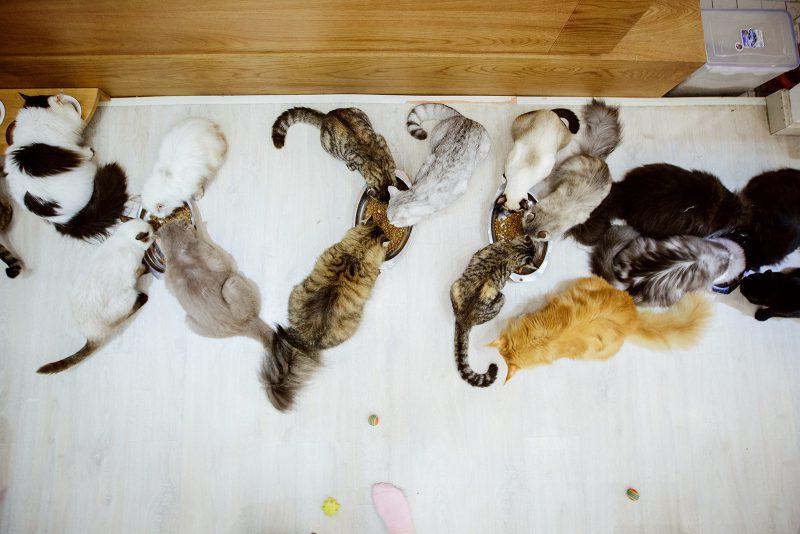 Кормление котов в Хошимине