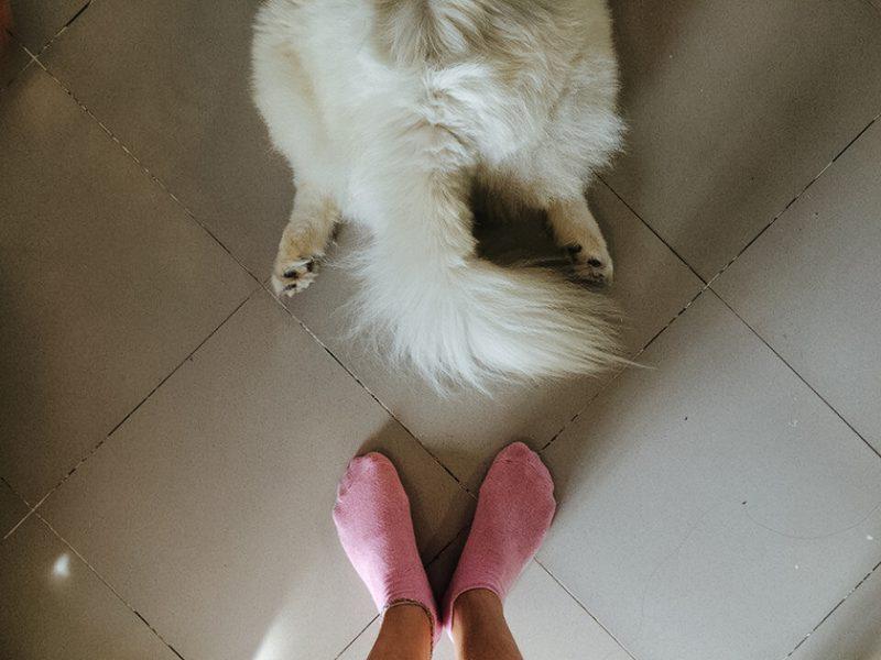 Собака задние ноги