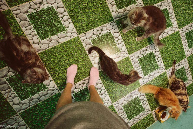 фото матёрых котов