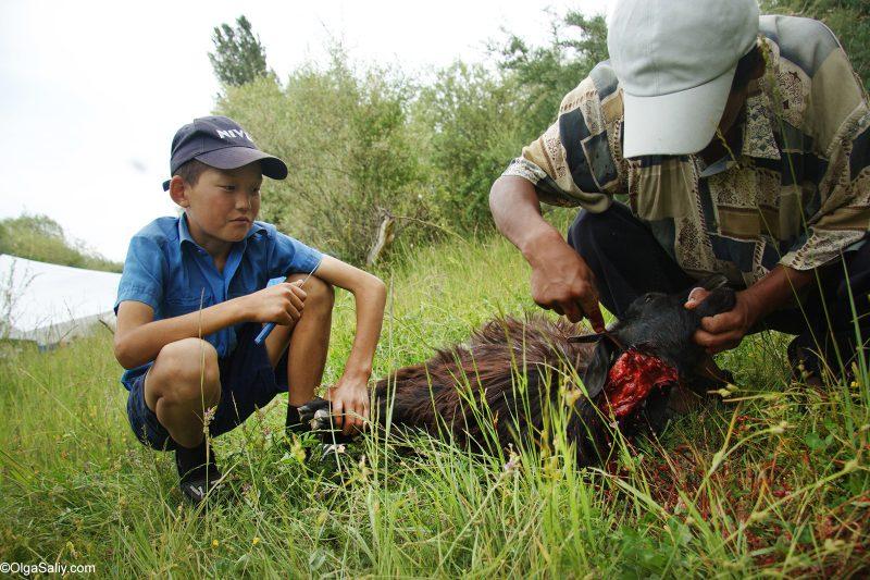 Киргизы режут барана возле Иссык-Куля