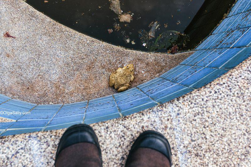 Большая лягушка в заброшенном бассейне