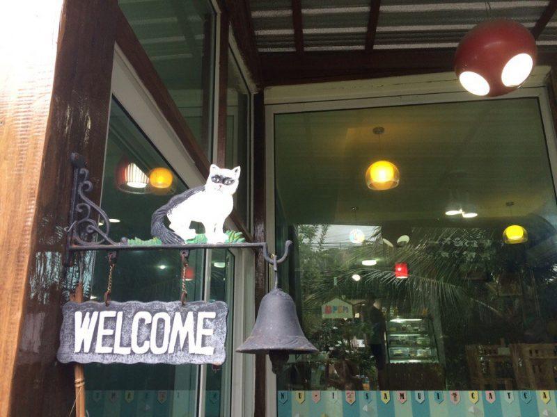 Кото-кафе на Ко Самуи