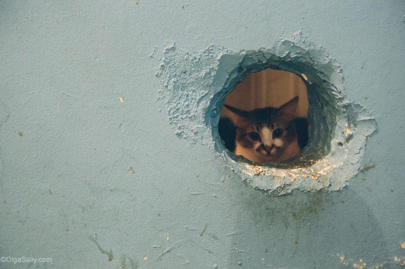 Котики в кото кафе Куала Лумпур, Малайзия (16)